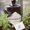 Happiness with Hendrick's Gin!
