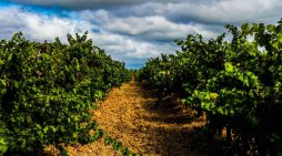 Wines of Tejo, Portugal