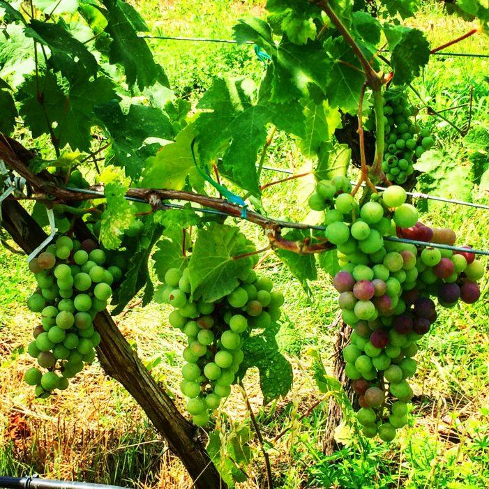 Millbrook Winery, NY