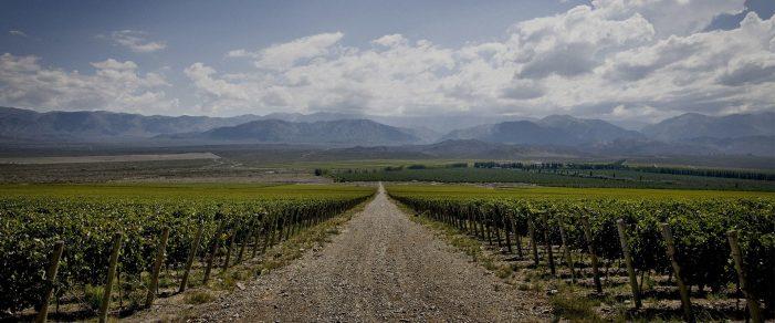 Graffigna Winery, Argentina!