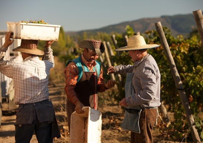 Erasmo Organic Wines from Chile!