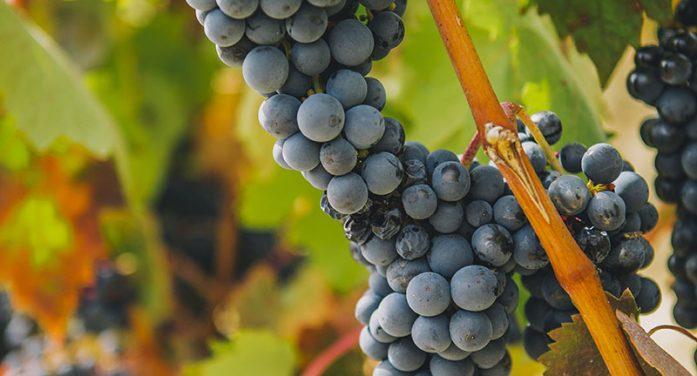 Ramón Bilbao Winery!