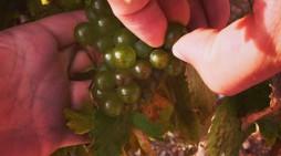 Sip The Wines of Spain!